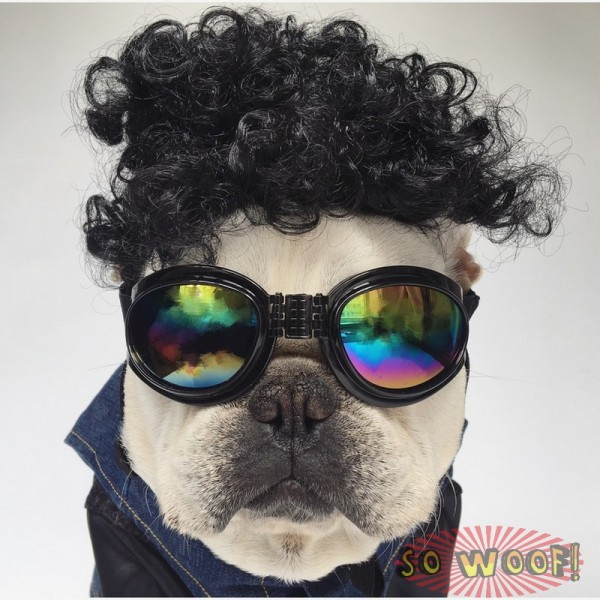 Pets Dogs Cats Curly Hair Wig for Photoshoot Funny Cute Costume FUN FUN FUN!