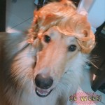 Pets Dogs Cats Short Blond Hair Wig for Photoshoot Funny Cute Costume FUN FUN FUN!