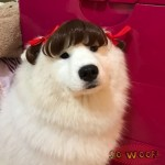 Pets Dogs Cats Hair Wig for Photoshoot Funny Cute Costume FUN FUN FUN!